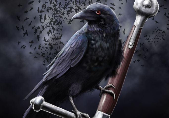 raven-marin-headlands_1694-cropasf
